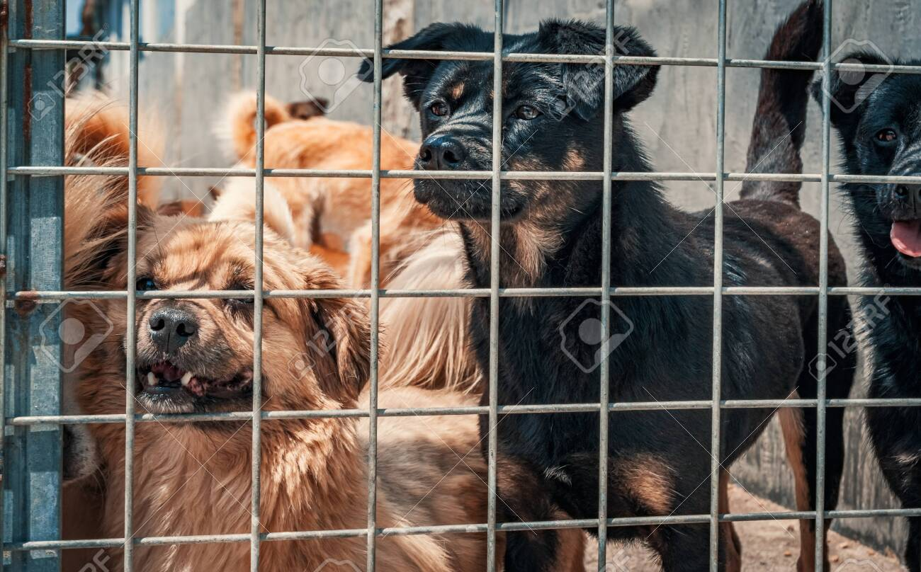 Unwanted and homeless dogs in animal shelter. Asylum for dog. Stray dogs behind the fence. Poor and hungry street dogs and urban free-ranging dogs. - 136731617