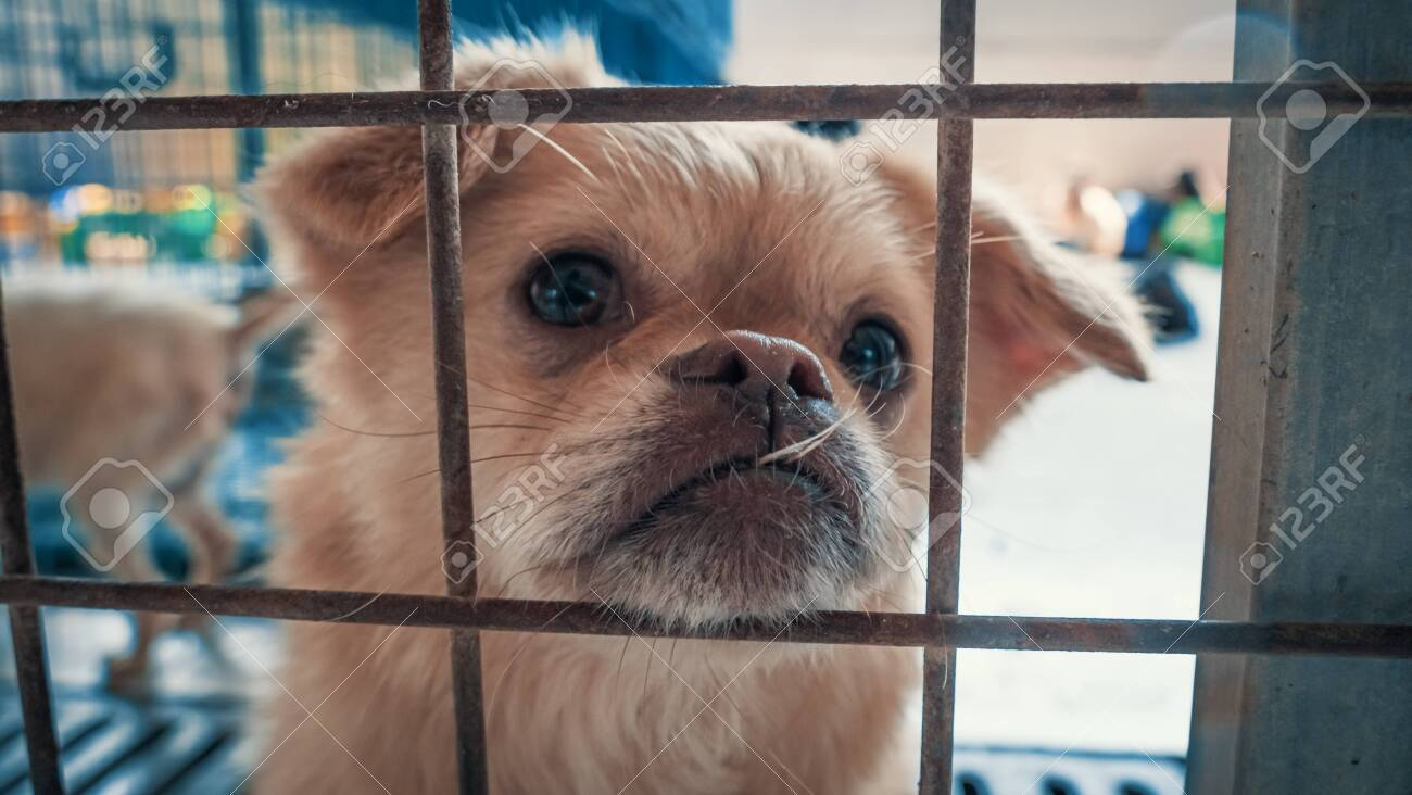 Portrait of sad dog in shelter behind fence waiting to be rescued and adopted to new home. Shelter for animals concept - 142177173