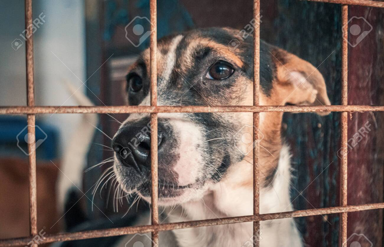Portrait of sad dog in shelter behind fence waiting to be rescued and adopted to new home. - 140627913