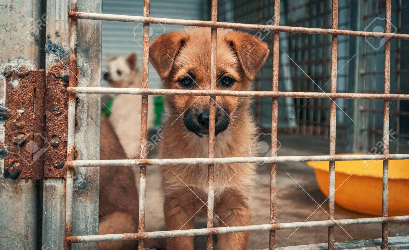 Portrait of sad puppy in shelter behind fence waiting to be rescued and adopted to new home. Shelter for animals concept - 141696192