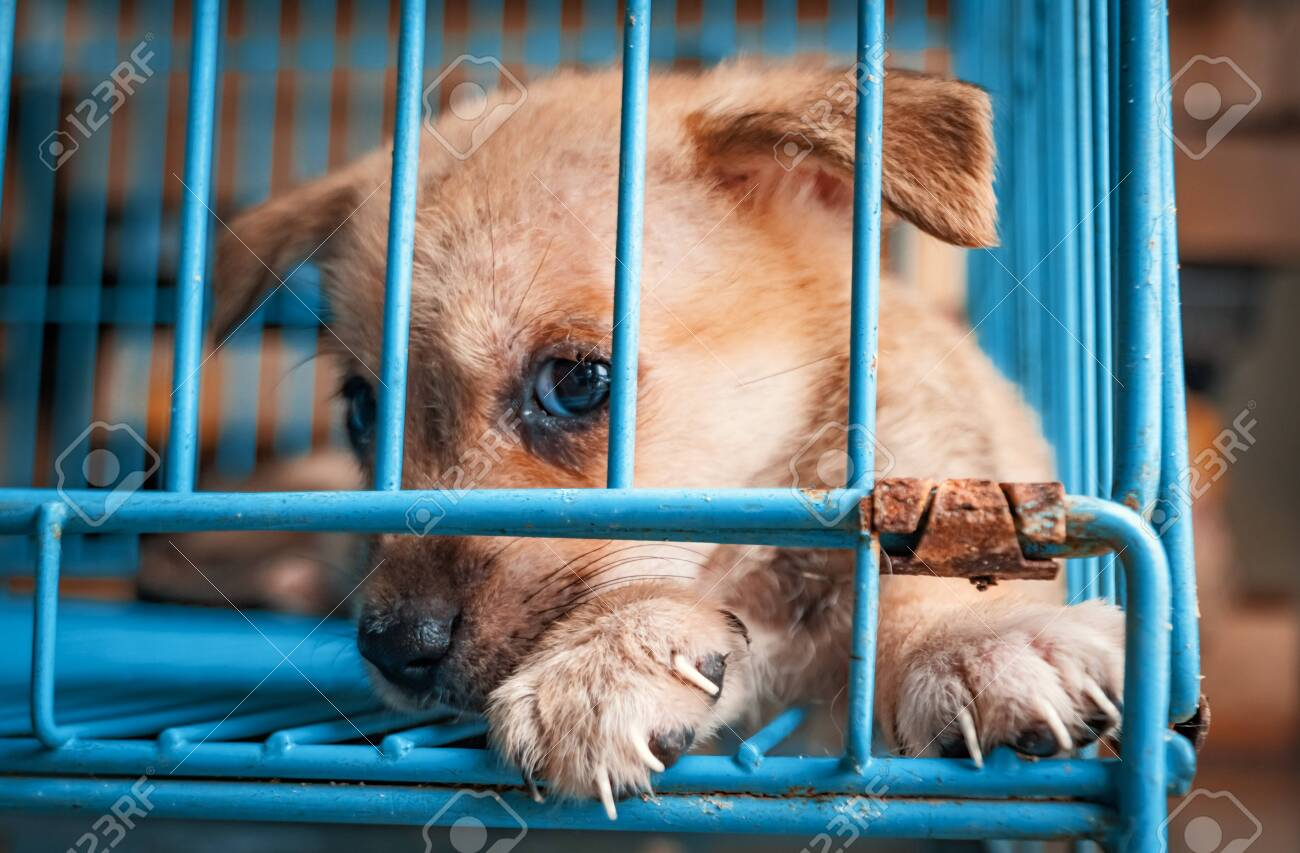 Portrait of sad puppy in shelter behind fence waiting to be rescued and adopted to new home. Shelter for animals concept - 141696182