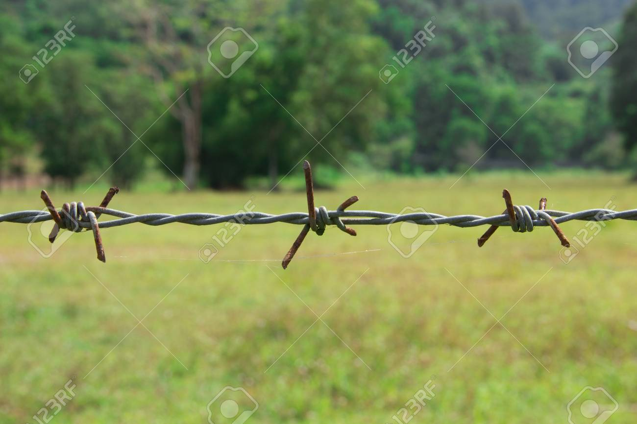 Metal barbed wire in closeup Stock Photo - 11589967