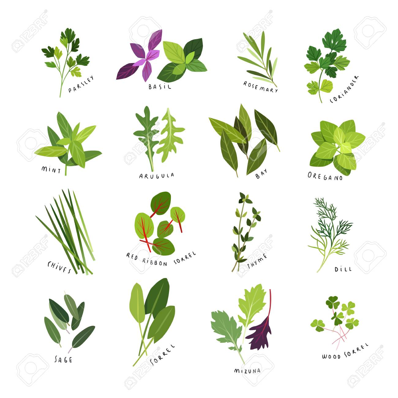Clip art illustrations of herbs and spices. - 96619938
