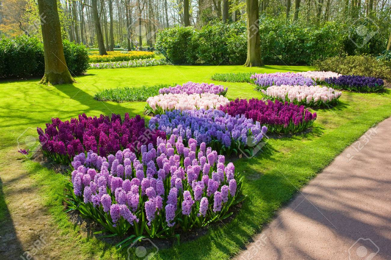 The Keukenhof is a popular flower garden which is visited by a million tourists from all around the world. It is open for only six weeks every year. - 57296416