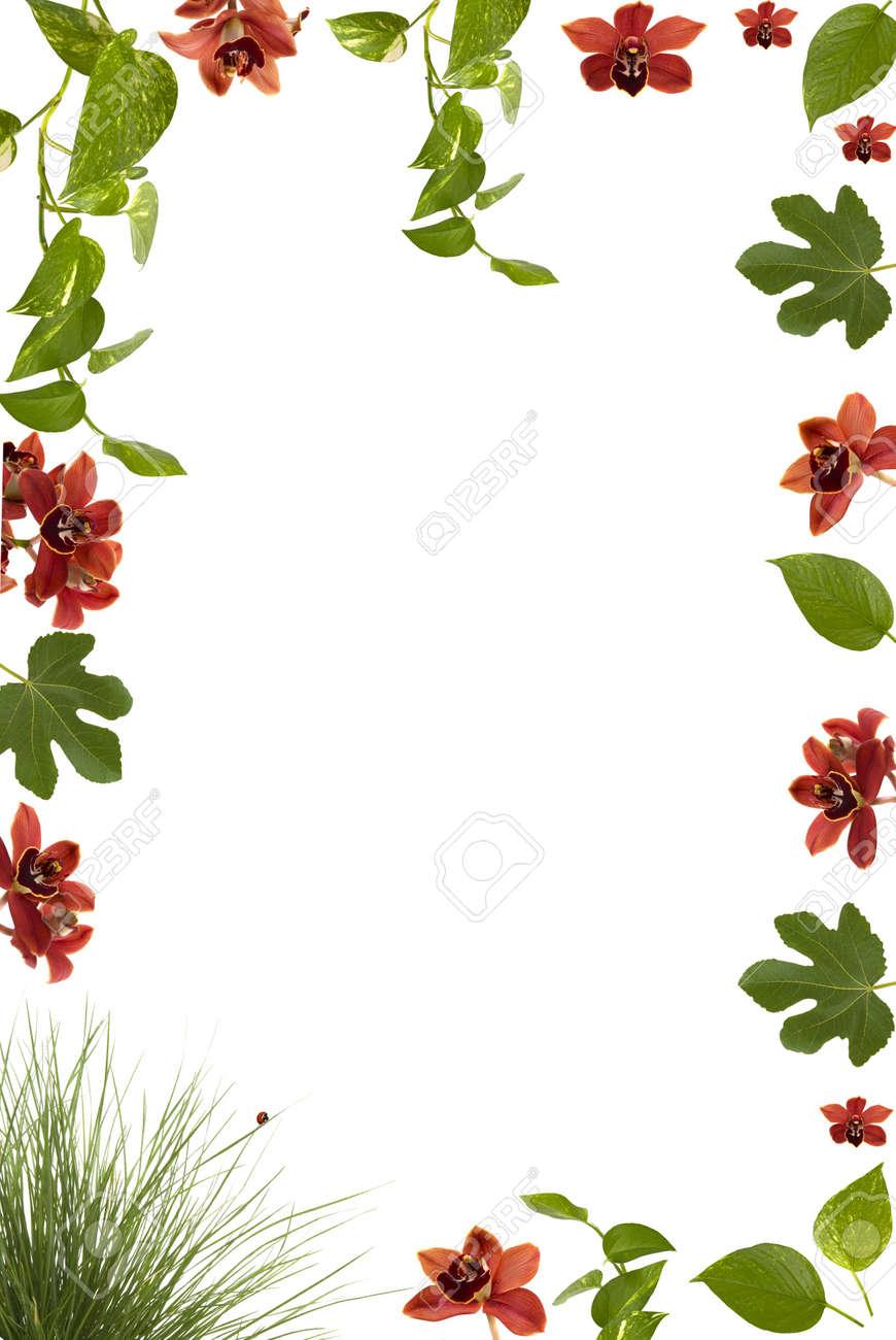 Hermoso Marco Floral Con Orquídeas, Lady Bug, Higo Y Otras Hojas De ...