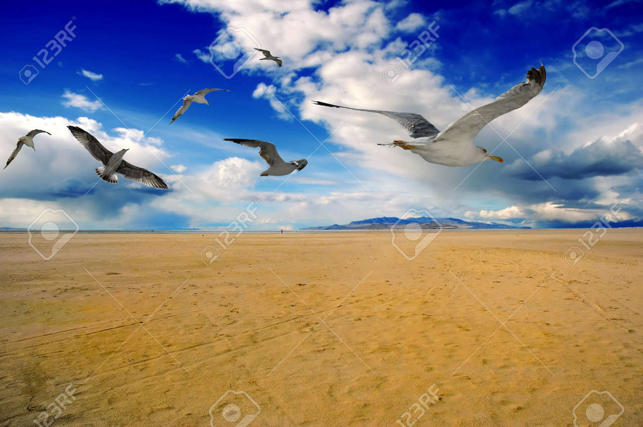 Beach sand and birds Stock Photo - 1930579