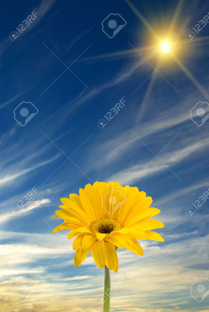 Daisy, sun, and blue sky Stock Photo - 2052765