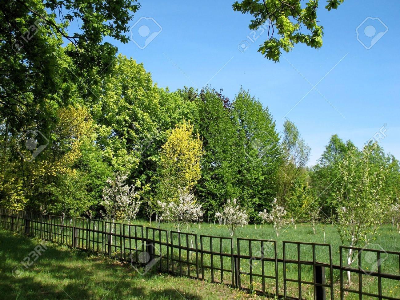 Grandi Alberi Da Giardini il giovane fiore giardino è recintato da un recinto. su una distanza di  tiro i grandi alberi decidui. un giardino botanico, minsk, bielorussia.