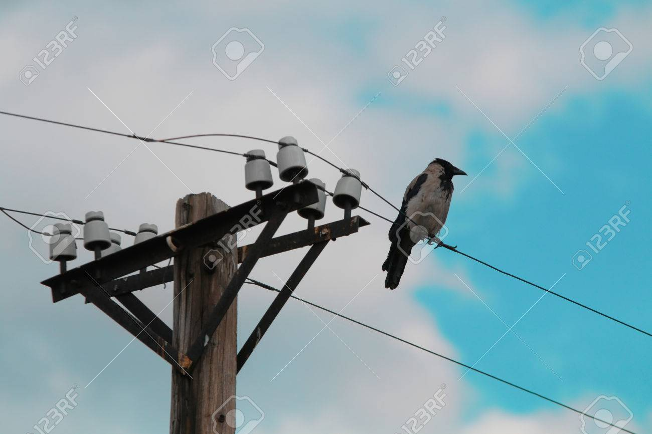 Single Bird Sitting On A Cable Of A Power Pillar Stock Photo ...