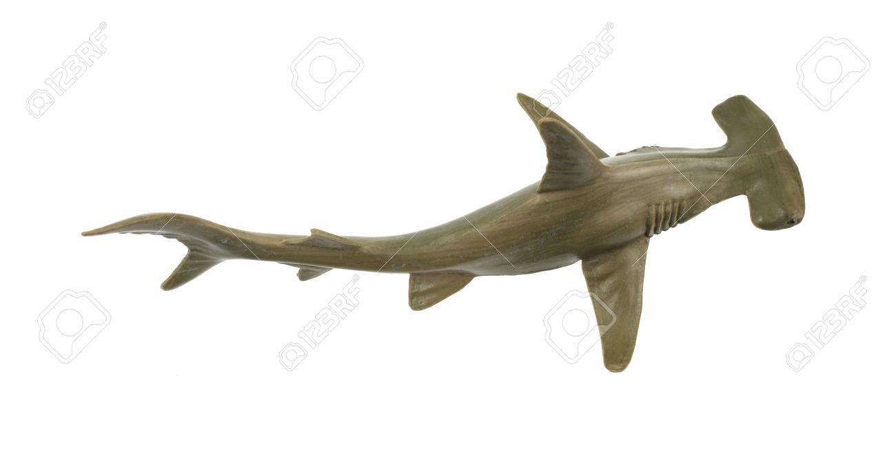 a toy hammerhead shark on a white background stock photo picture