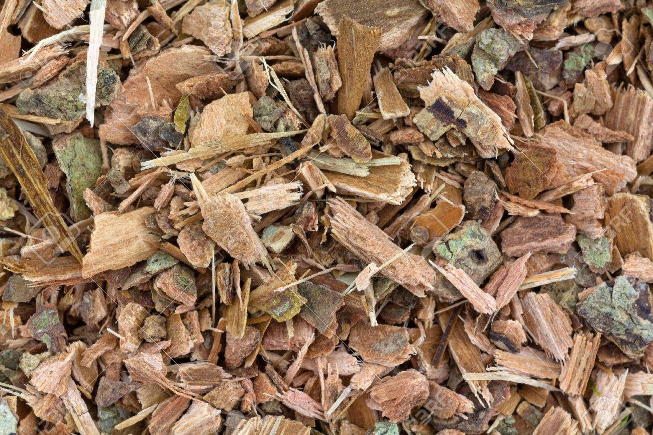 A Very Close View Of Shredded Witch Hazel Bark Stock Photo