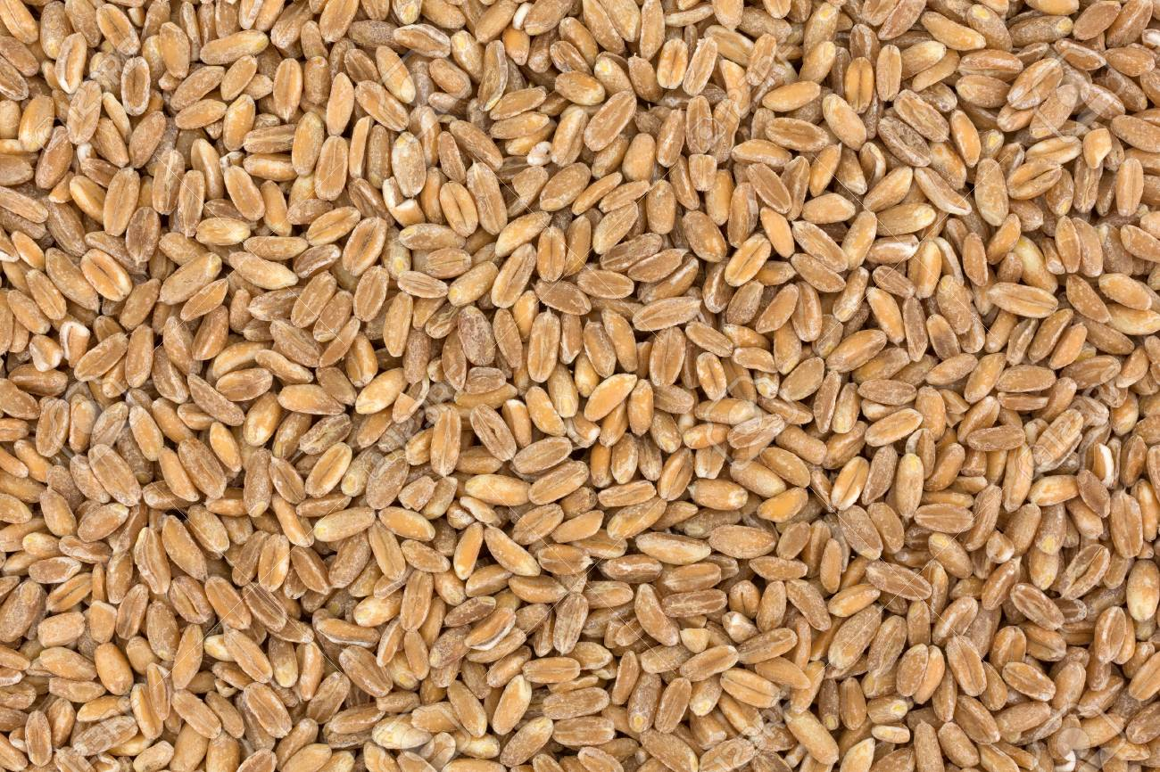 A Very Close View Of Farrow Organic Grain Stock Photo Picture And