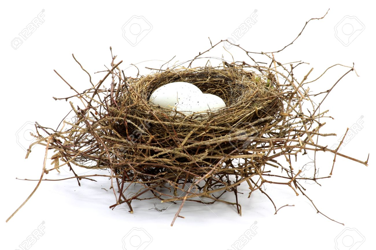 bird nest with two eggs isolated on white background - 51589690