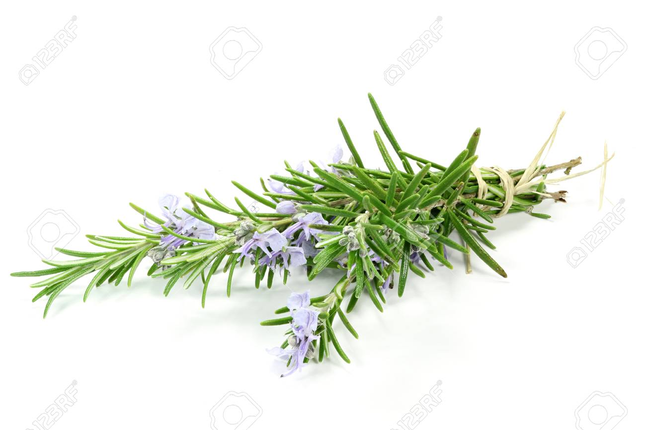 bunch of rosemary isolated on white background - 57834989