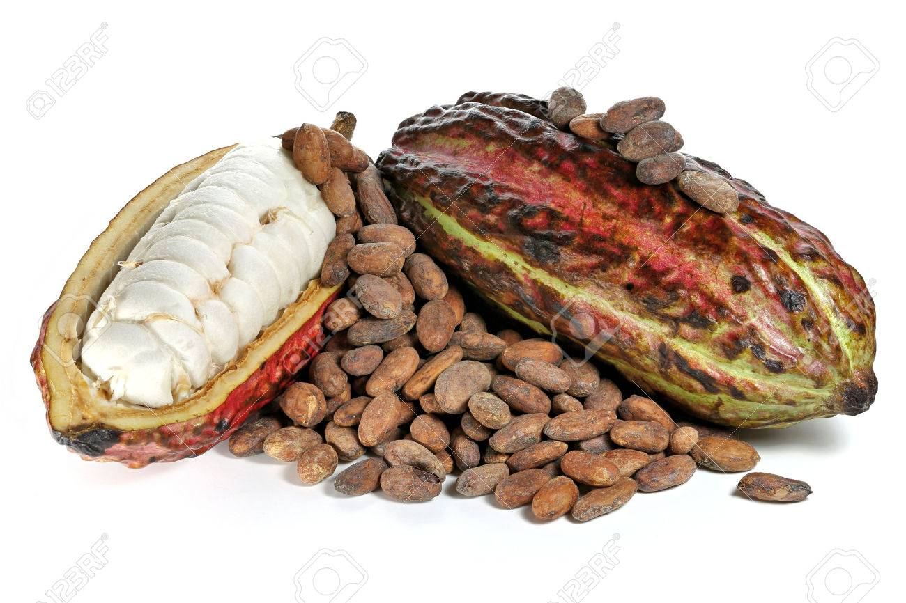 cacao fruits with roasted cacao beans isolated on white background - 66312853
