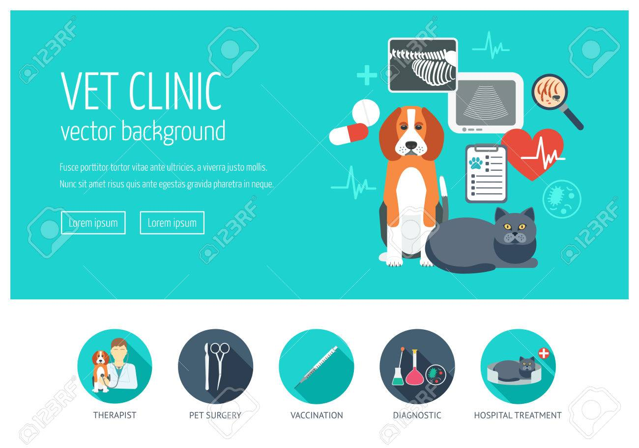 vet clinic web design concept for website and landing page web