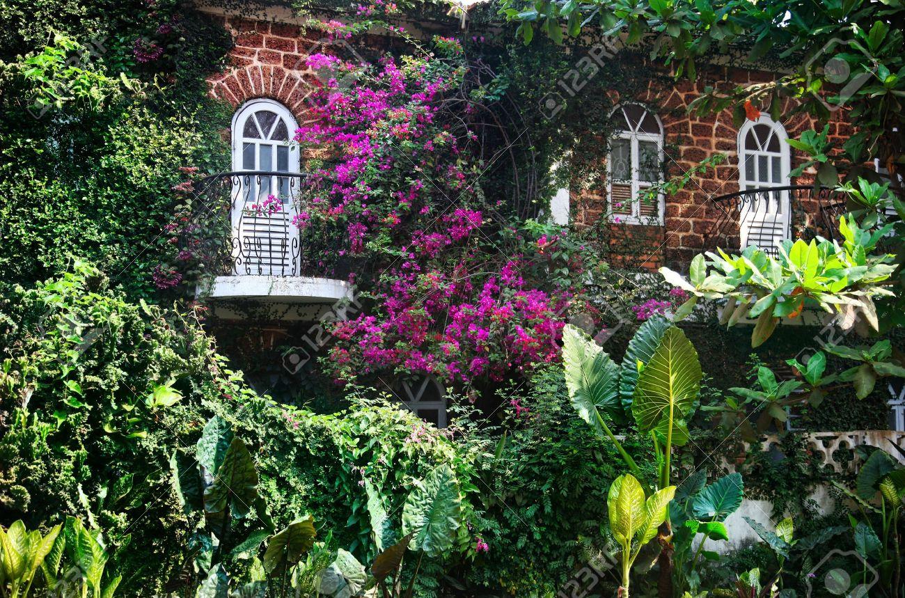 11270295-Maison-avec-deux-fen-tres-et-balcons-avec-de-nombreuses-plantes-et-fleurs-magenta-autour-de-Goa-en-I-Banque-d'images
