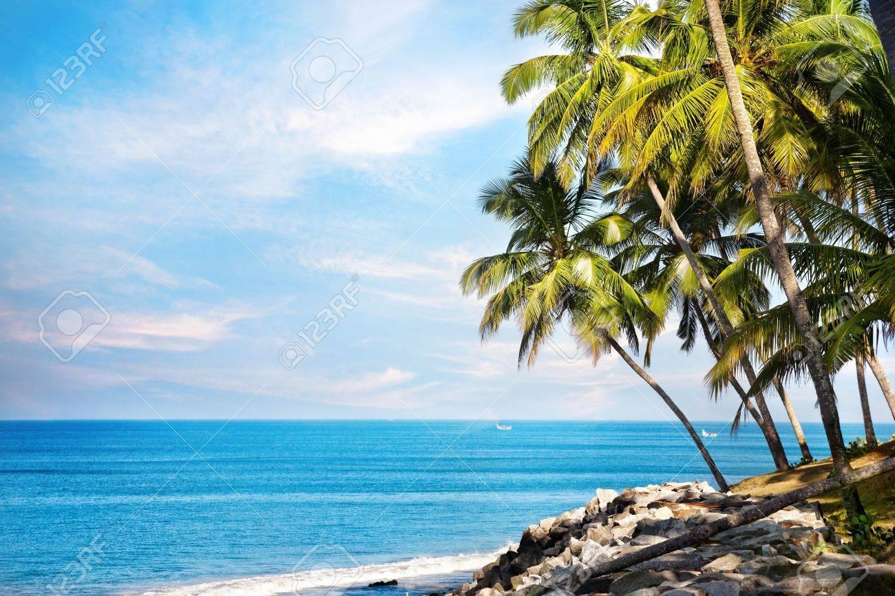 Coconut palms on the beach near the blue ocean in Varkala, Kerala, India Stock Photo - 16589776