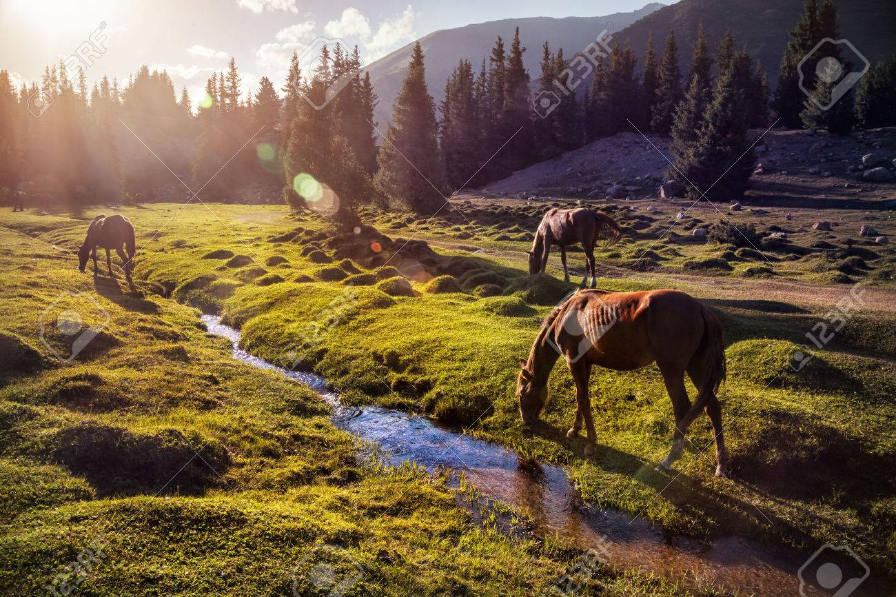Horses in the Gregory gorge mountains of Kyrgyzstan, Central Asia Stock Photo - 40909776