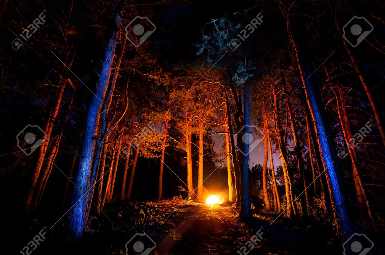 Dark forest with campfire at night Stock Photo - 46490814