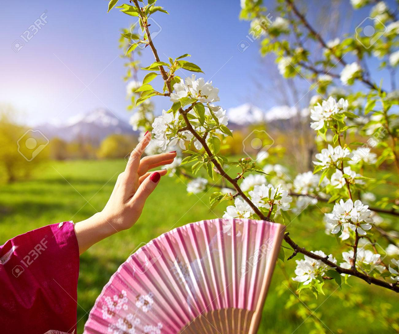 Woman in pink kimono touching flowers of blossom cherry by her stock photo woman in pink kimono touching flowers of blossom cherry by her hand spring season concept mightylinksfo