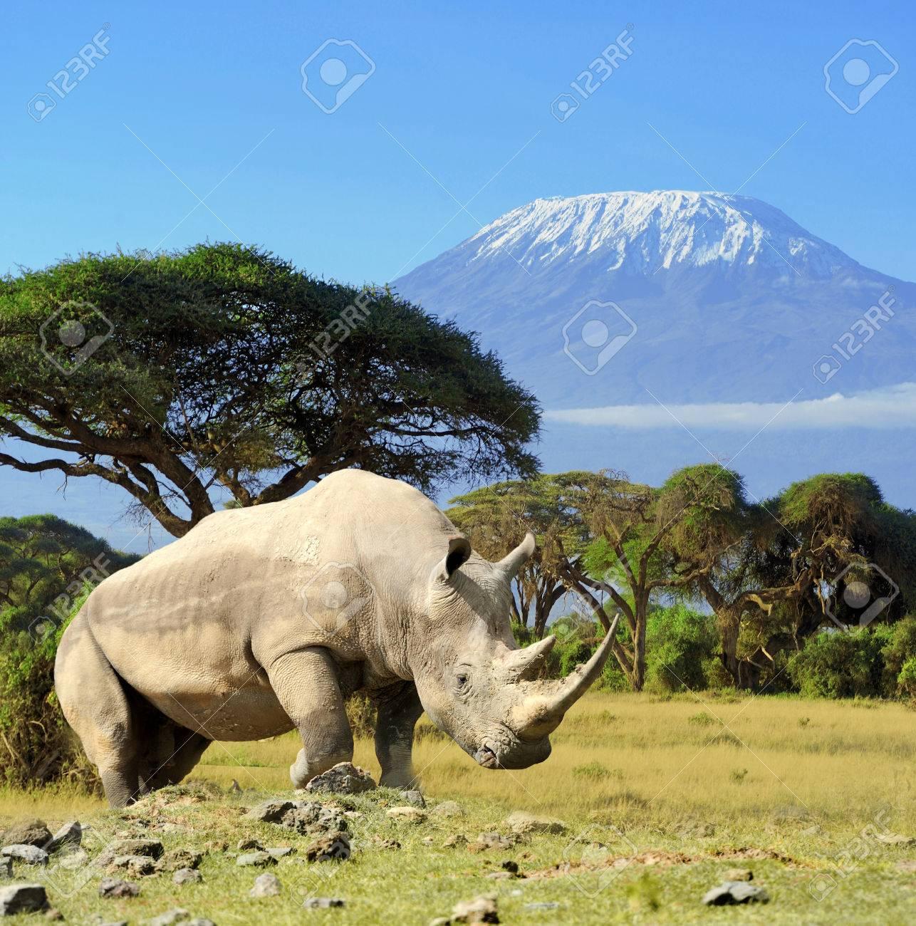 Rhino in front of Kilimanjaro mountain - Amboseli national park Kenya Standard-Bild - 37378464