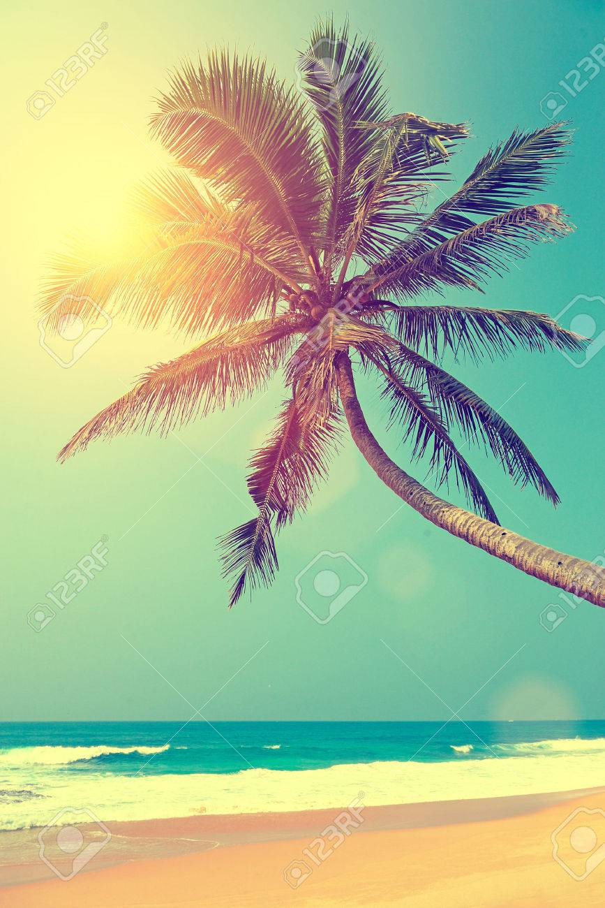 Tropical beach with palm in Sri Lanka Standard-Bild - 38030952