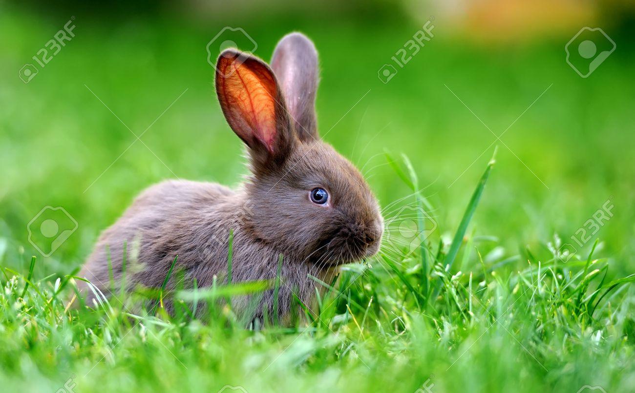 Little rabbit on green grass in summer day Standard-Bild - 38031017