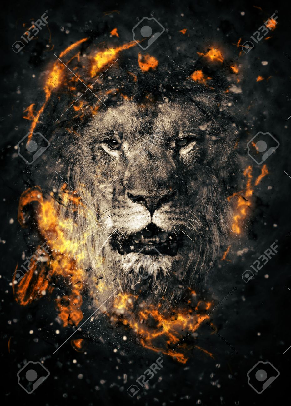 Lion portrait in fire on black background Standard-Bild - 38341154