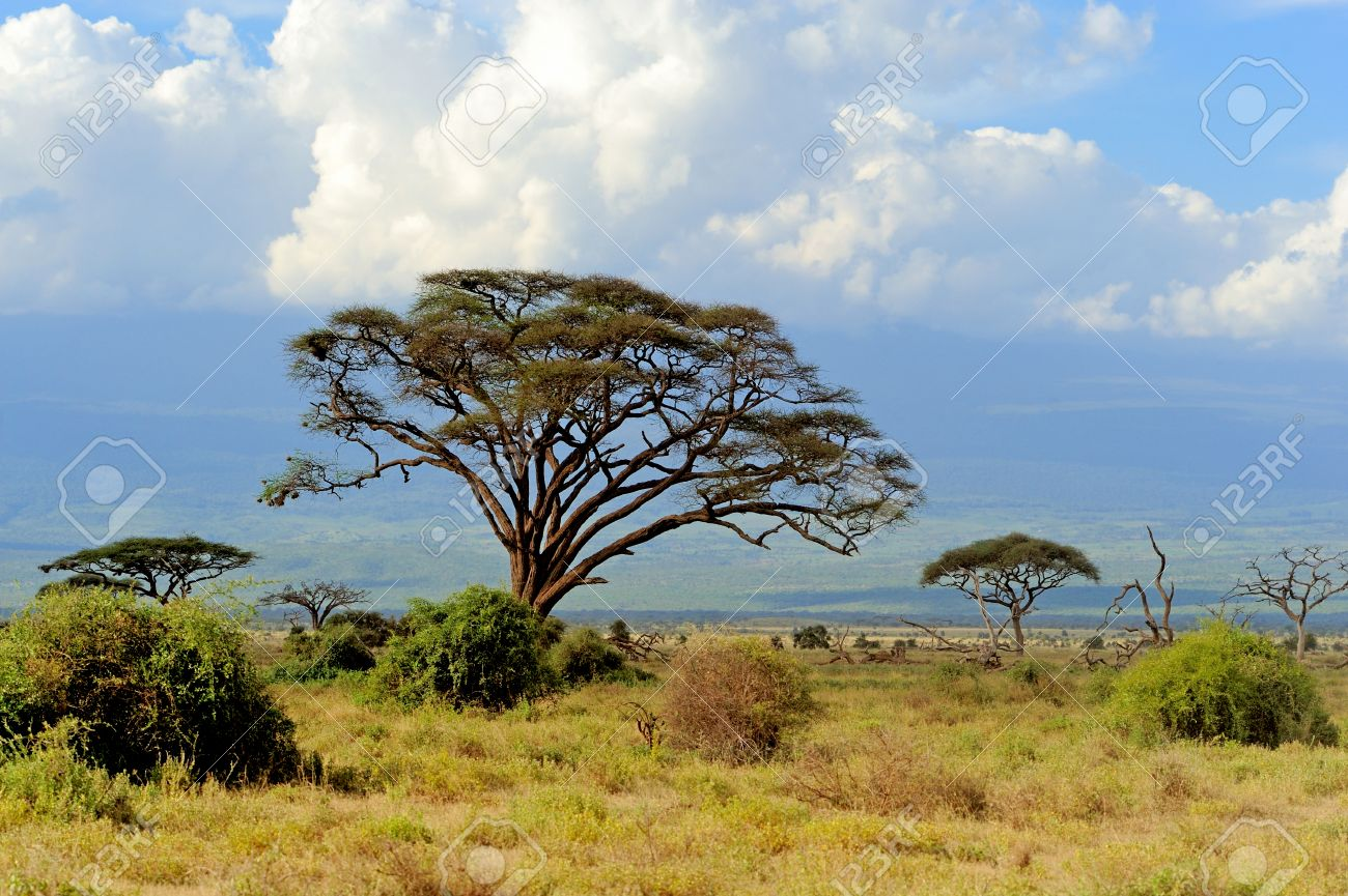 Savannah landscape in the national park in kenya Standard-Bild - 38877743