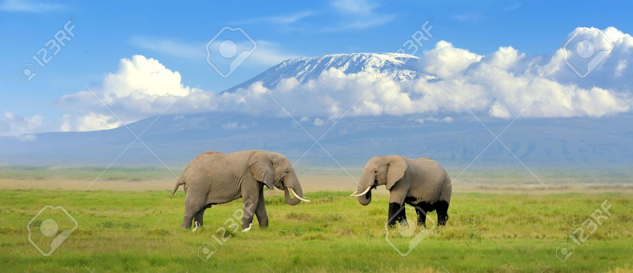 Elephant with Mount Kilimanjaro in the background Standard-Bild - 40237647