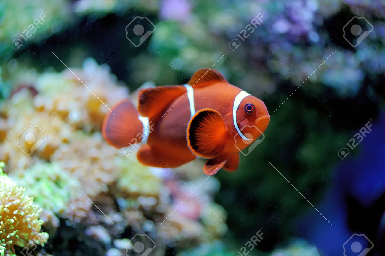 Underwater Scene, Showing Different Colorful Fishes Swimming Stock ...
