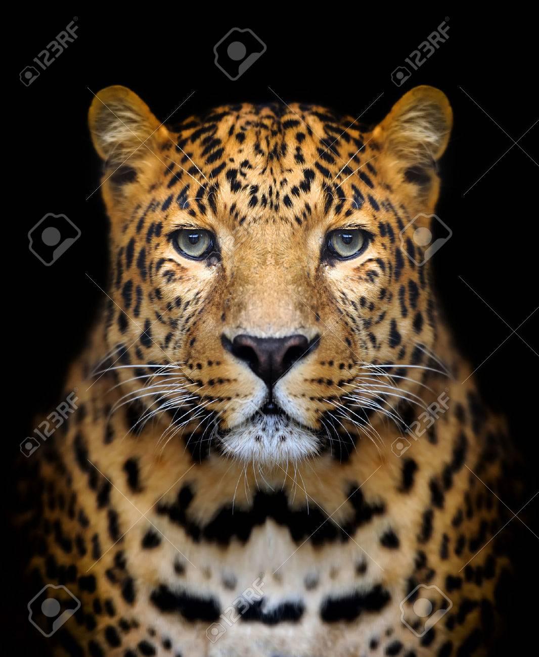 Close-up leopard portrait on dark background Standard-Bild - 40502196