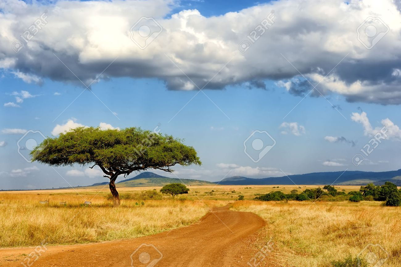 Beautiful landscape with tree in Africa Standard-Bild - 44850793