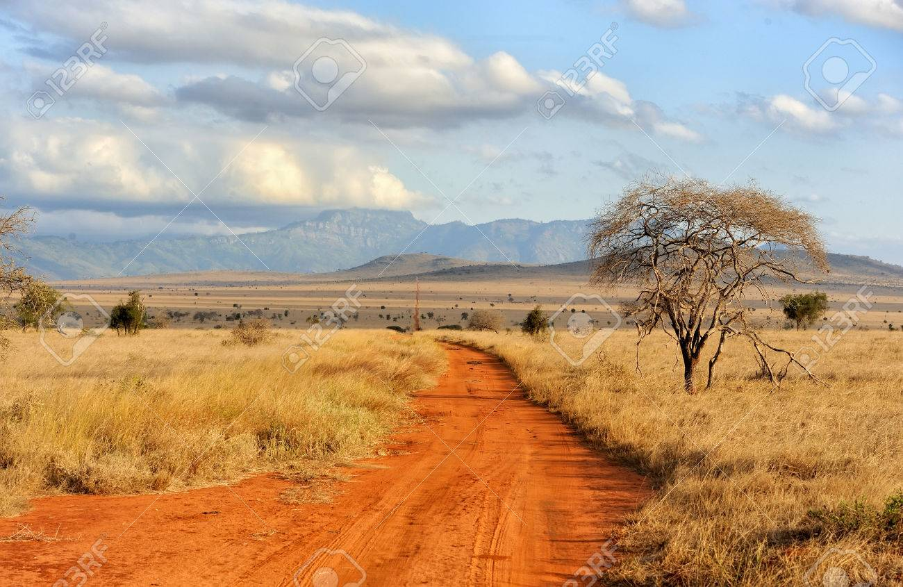 Beautiful landscape with tree in Africa Standard-Bild - 47013554