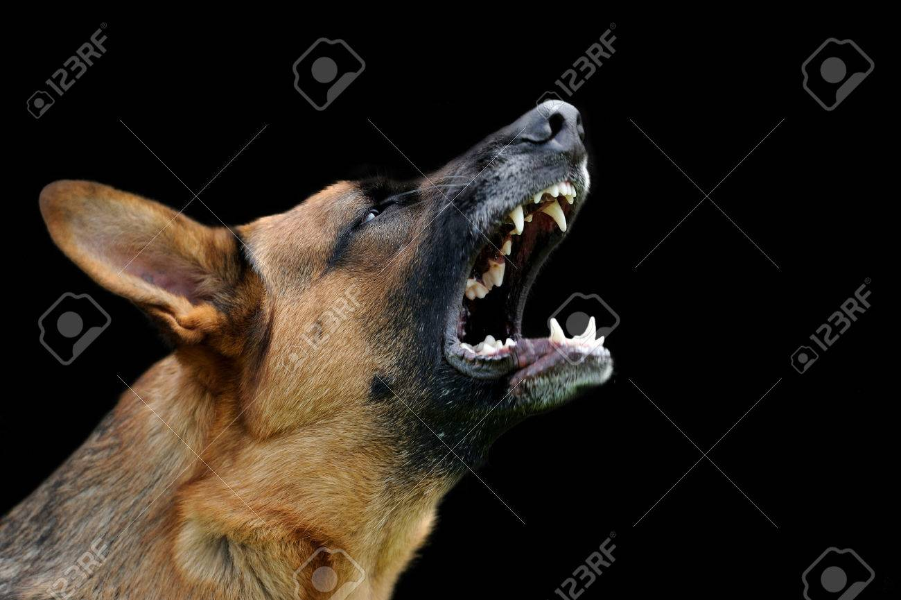 Close-up portrait angry dog on dark background Standard-Bild - 48167000