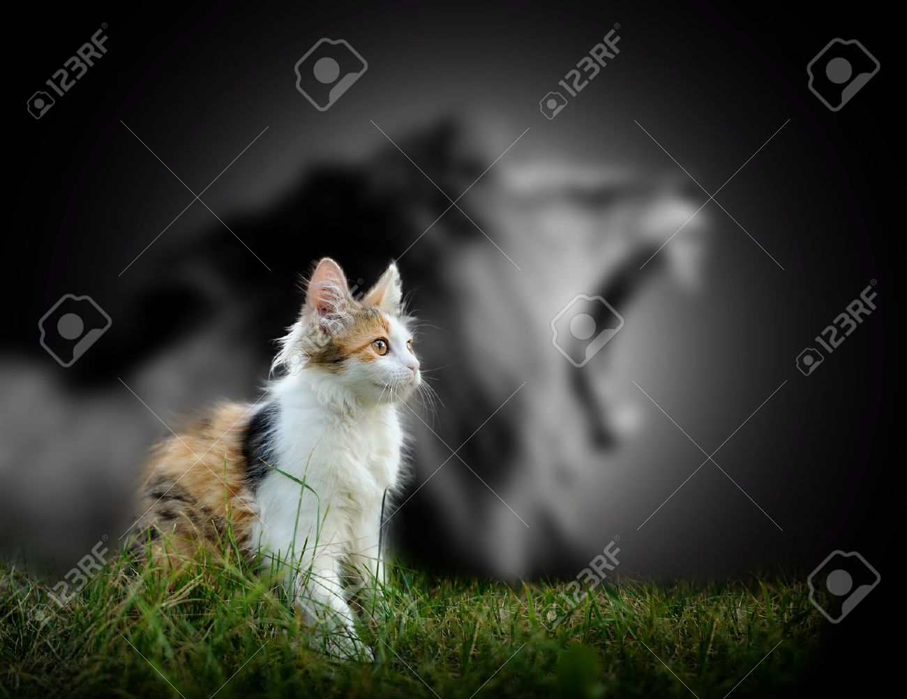 Small cat with big angry male lion shadow Standard-Bild - 49212313