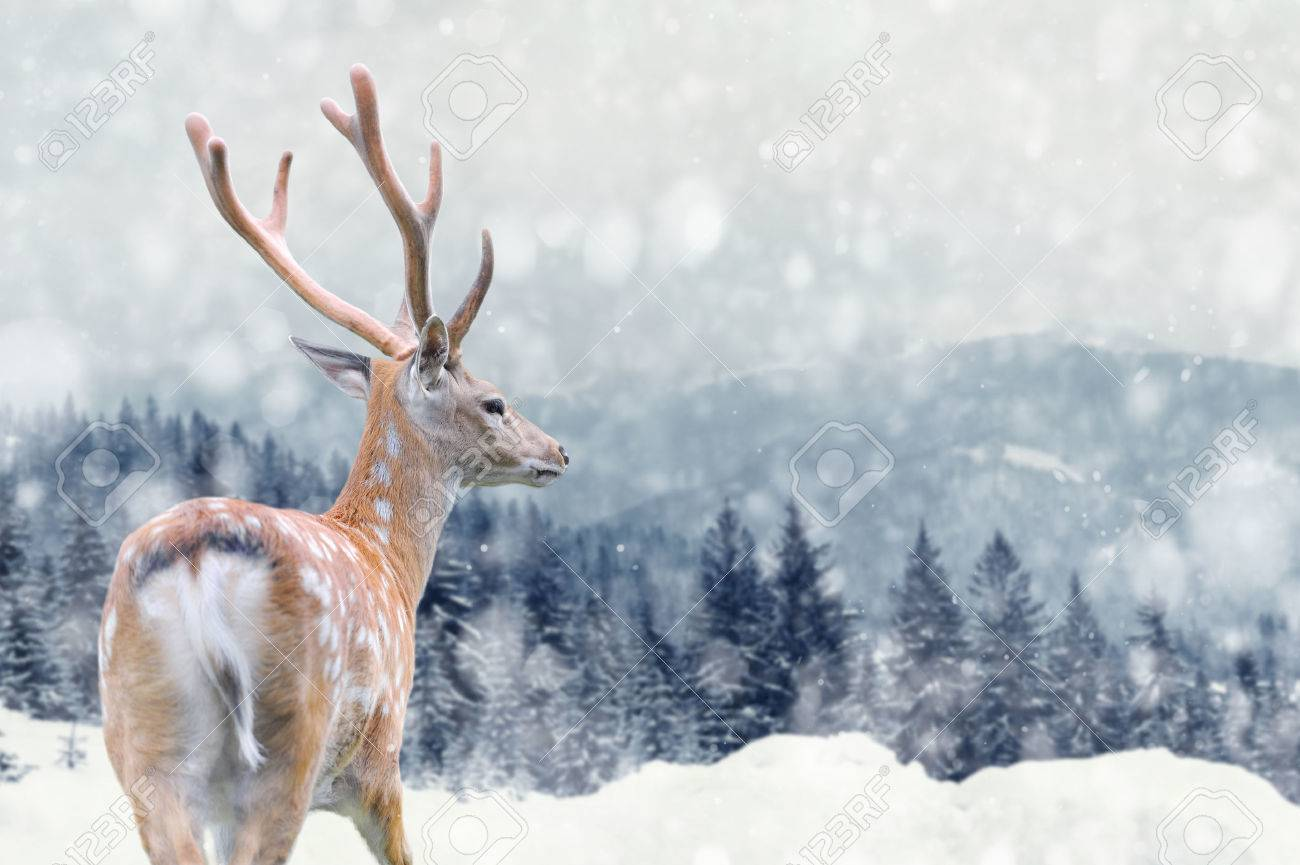 Big male deer on winter mountain backgroundwith snowfalls Standard-Bild - 49212319