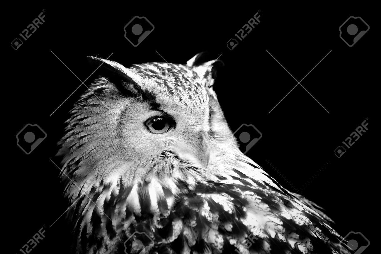 Owl on dark background black and white image stock photo 53677224