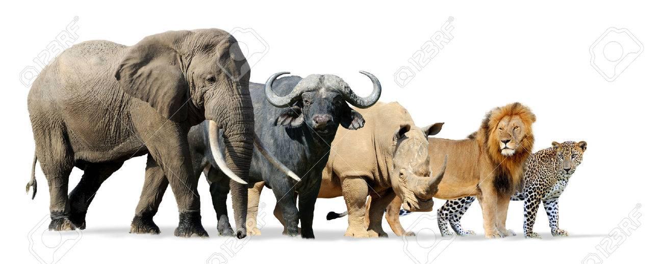 Big five game isolated on white - Lion, Elephant, Leopard, Buffalo and Rhinoceros Standard-Bild - 57827714