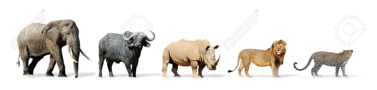 big five spel geïsoleerd op wit lion elephant leopard buffalo