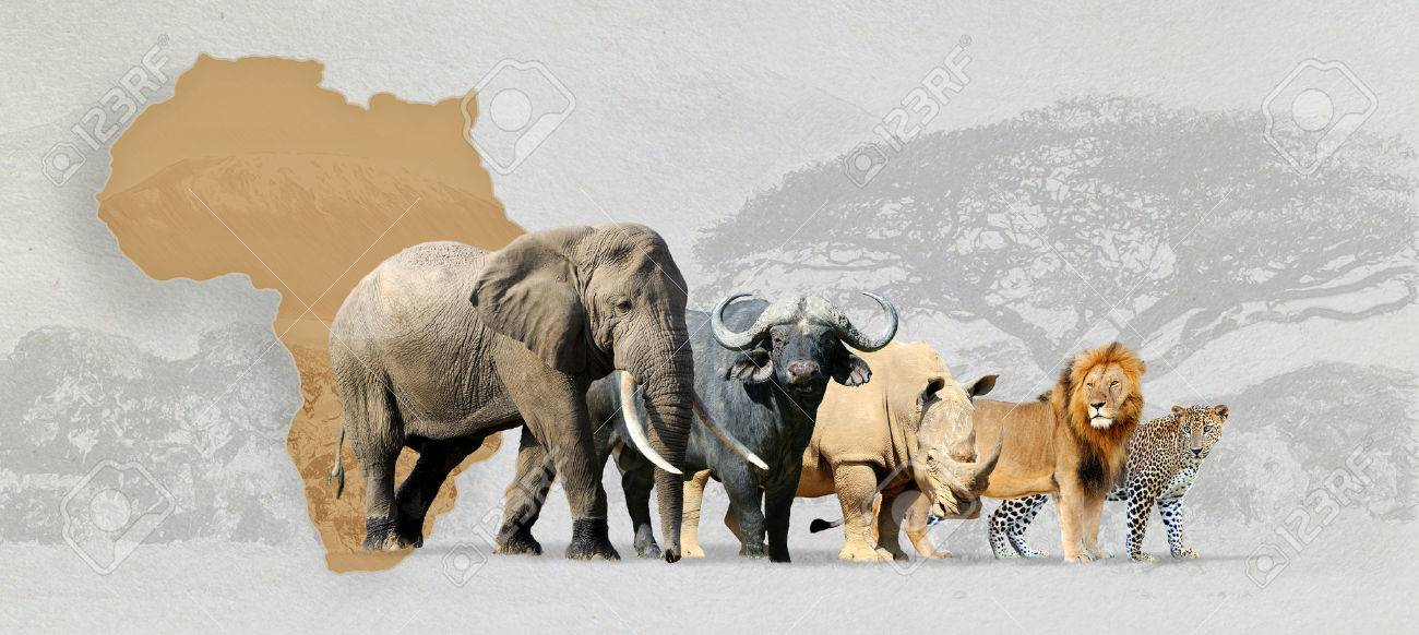 Big five africa - Lion, Elephant, Leopard, Buffalo and Rhinoceros Standard-Bild - 57827749