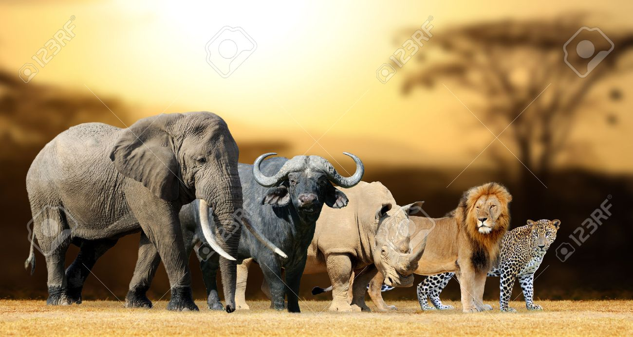 Big five africa - Lion, Elephant, Leopard, Buffalo and Rhinoceros Standard-Bild - 59731346