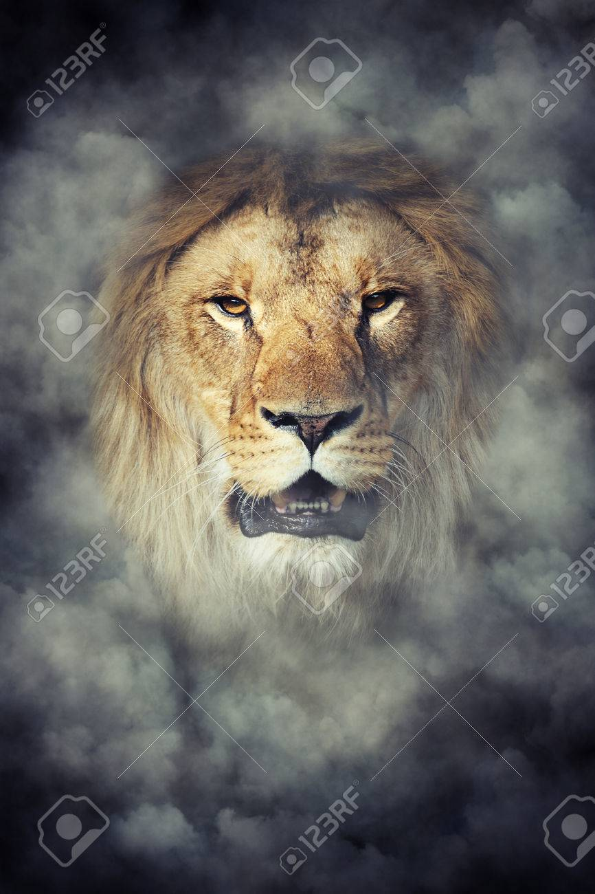 Close Male Lion In Smoke On Dark Background Stock Photo Picture And Royalty Free Image Image 64459560