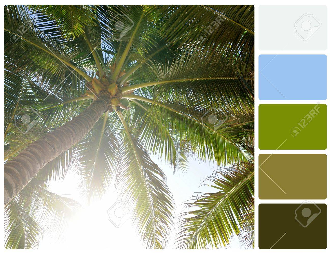 Palm Tree. Colour Palette With Complimentary Colour Swatches Stock ...