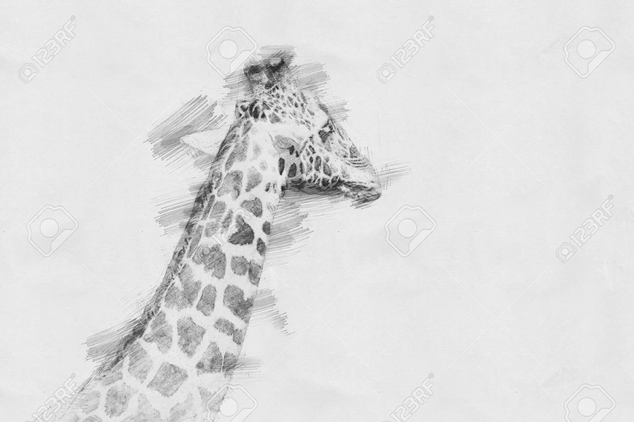 Giraffe black and white sketch with pencil