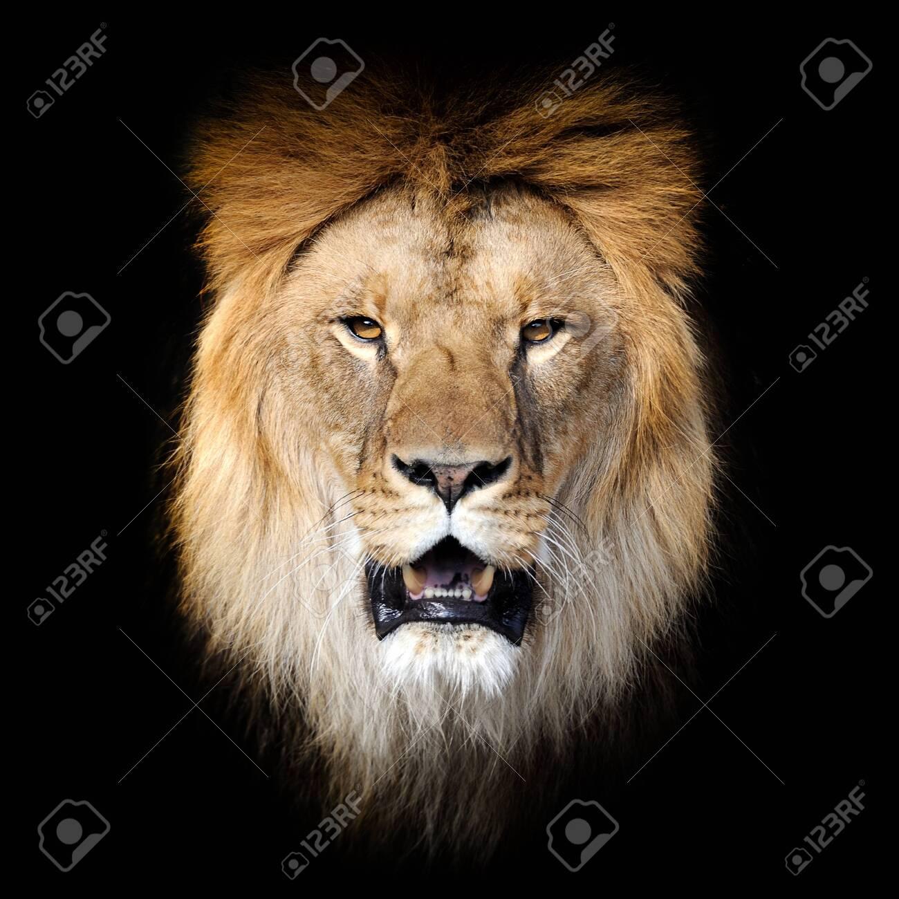 Close up Lion portrait isolated on dark background - 137574618