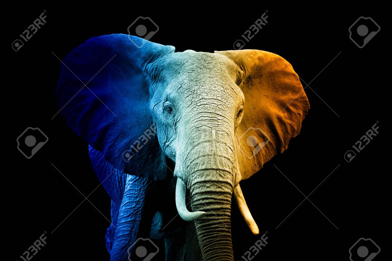 Close up portrait of elephant in a hot and cold shade - 156519492