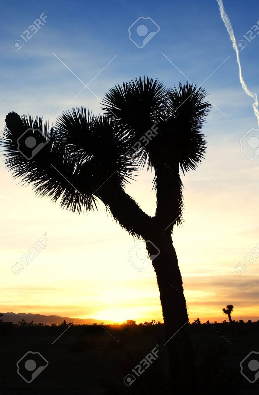 silhouette of a Joshua tree at sunset in California's Mojave desert. Stock Photo - 2990961