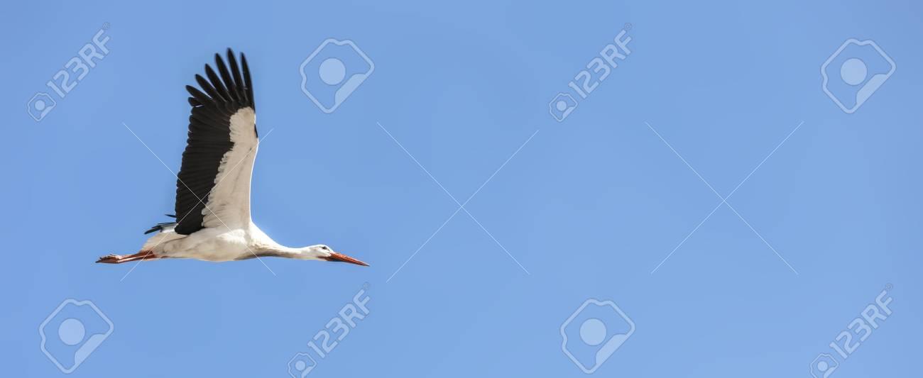 Flying Stork - 121069403